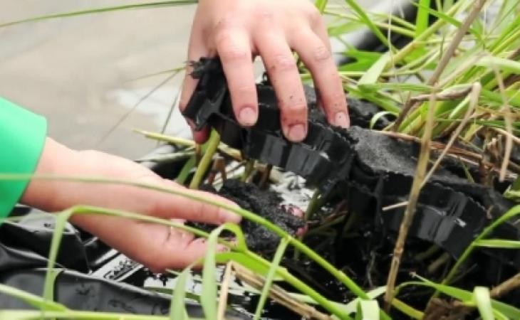 İsrail alimləri elektrik enerjisini bitkilərdən almağa çalışırlar